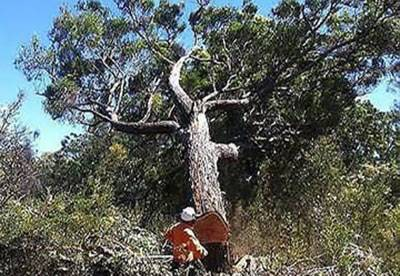 Tree Removal.